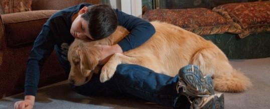O que leva um cão a fazer o que faz?