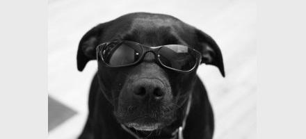 Compreenda o seu cão – introdução