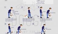 Passeios com trela – As melhores técnicas e a mecânica do andamento