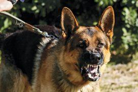 Não trabalhamos cães para guarda ou defesa D.lei 43/2013