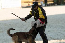 Não trabalhamos cães para competições